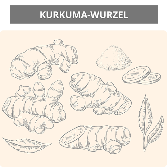 wurzel-skizze-kurkuma-ratgeber-infografik